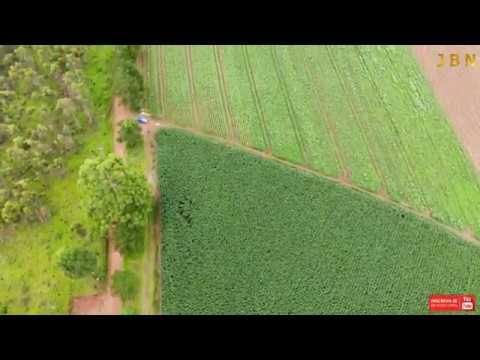 Plantação de Milho , Jarinu SP.