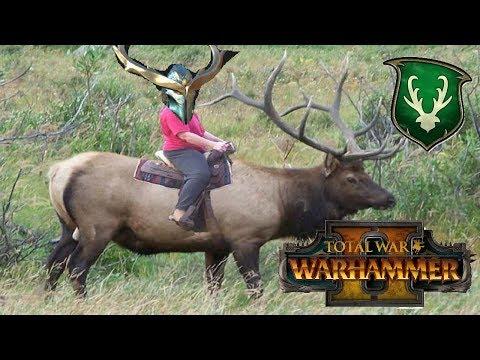 SISTER SISTER   Wood Elves vs Greenskins : Total War Warhammer 2
