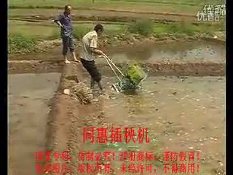 rice transplanter working