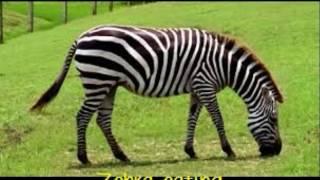 LITR 630   Zebra Digital Photo Story