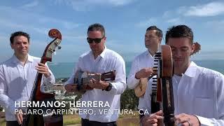 Hermanos Herrera 1er Festival Internacional de Arpistas Virtual Mexico 2020