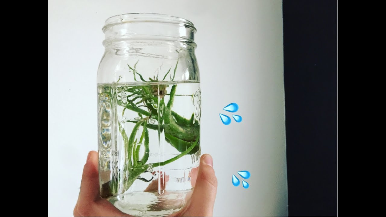 Air Plant Watering Tips Youtube