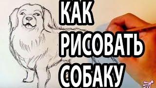 КАК НАРИСОВАТЬ СОБАКУ КАРАНДАШОМ ПОЭТАПНО(Записала обучающее видео для начинающих - как нарисовать собаку карандашом поэтапно. На примере картинки..., 2015-10-16T11:10:51.000Z)