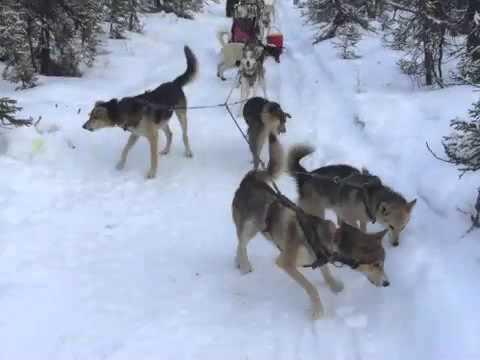 Fun White Mountains Training