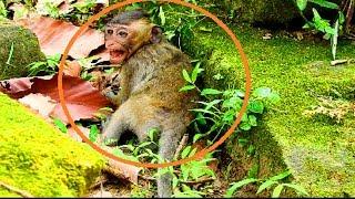 baby monkey hungry milk