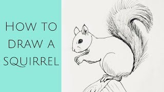 Beginners - how to draw a squirrel