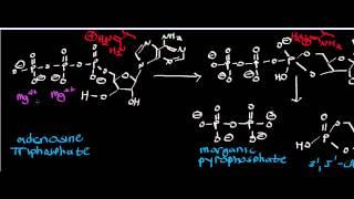 Adenylate Cyclase Mechanism / Inorganic Pyrophosphatase Mechanism