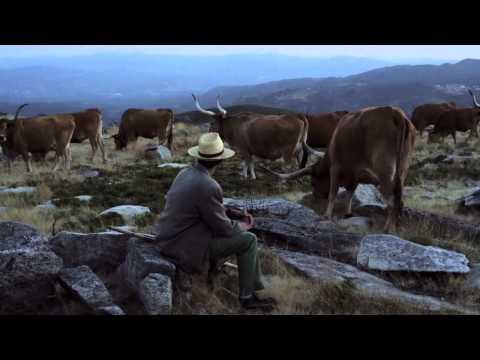 Trailer do filme A Noite Que Nunca Nos Encontramos