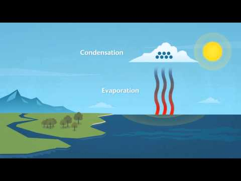 How does rain form and what is the water cycle?