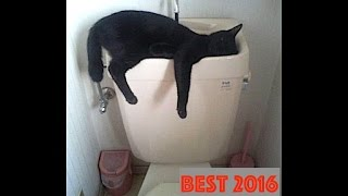 BEST 2016 FUNNY CATS SLEEPING COMPILATION