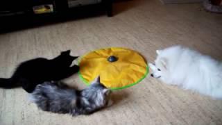 Игрушка для мейн-кунов и собак