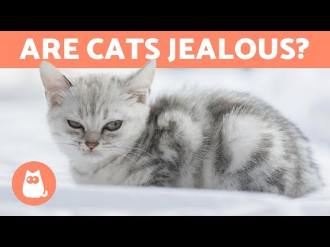 Pet Corner - Are CATS Jealous Animals? - Everything About Jealousy in Cats