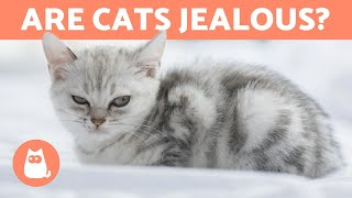 Are CATS Jealous Animals? - Everything About Jealousy in Cats