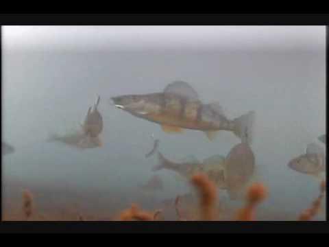 Perch trip on lake st clair michigan feb 2008 youtube for Ice fishing lake st clair