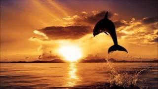 Aerium - Dolphins (Serenade Remix)