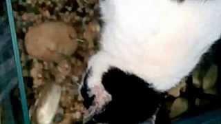 Рыбы кусают кота за язык