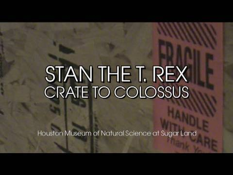 Stan the T. rex: From Crate to Collossus