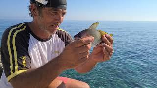 il pesce piu' difficile,e dalle carni prelibate, da tirar fuori da fondali rocciosi, verme di rimini