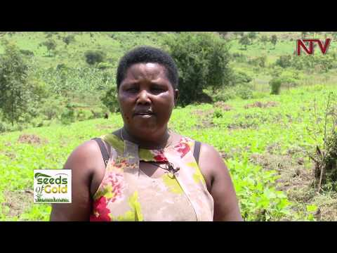 SEEDS OF GOLD: Reasons why you should Grow Beans