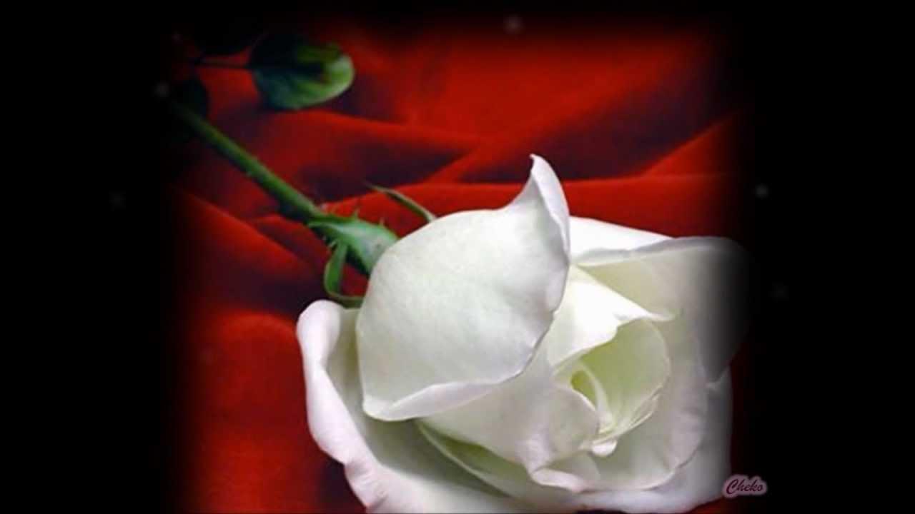 Las flores mas hermosas del mundo youtube - Rosas rosas hermosas ...