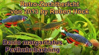 HD Perlhuhnbärblinge Zuchtbericht, Danio margaritatus Microrasbora Galaxy, Tipps Zucht Vermehrung