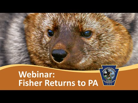 The Fisher Returns to Penn's Woods - Webinar