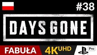 Days Gone PL  #38 (odc.38)  Wiedźma   Gameplay po polsku 4K