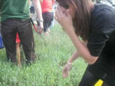 GGTV2 Guerrilla Gardening Lavender Field. Harvest 2009.