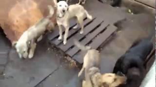 видео Зоотакси в Одессе