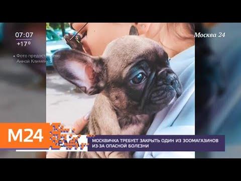 """Москвичка требует закрыть один из зоомагазинов """"Четыре лапы"""" - Москва 24"""