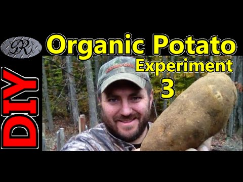 diy-organic-potato-tower-experiment-part-3.-grow-potatoes-like-you-have-never-seen-before.
