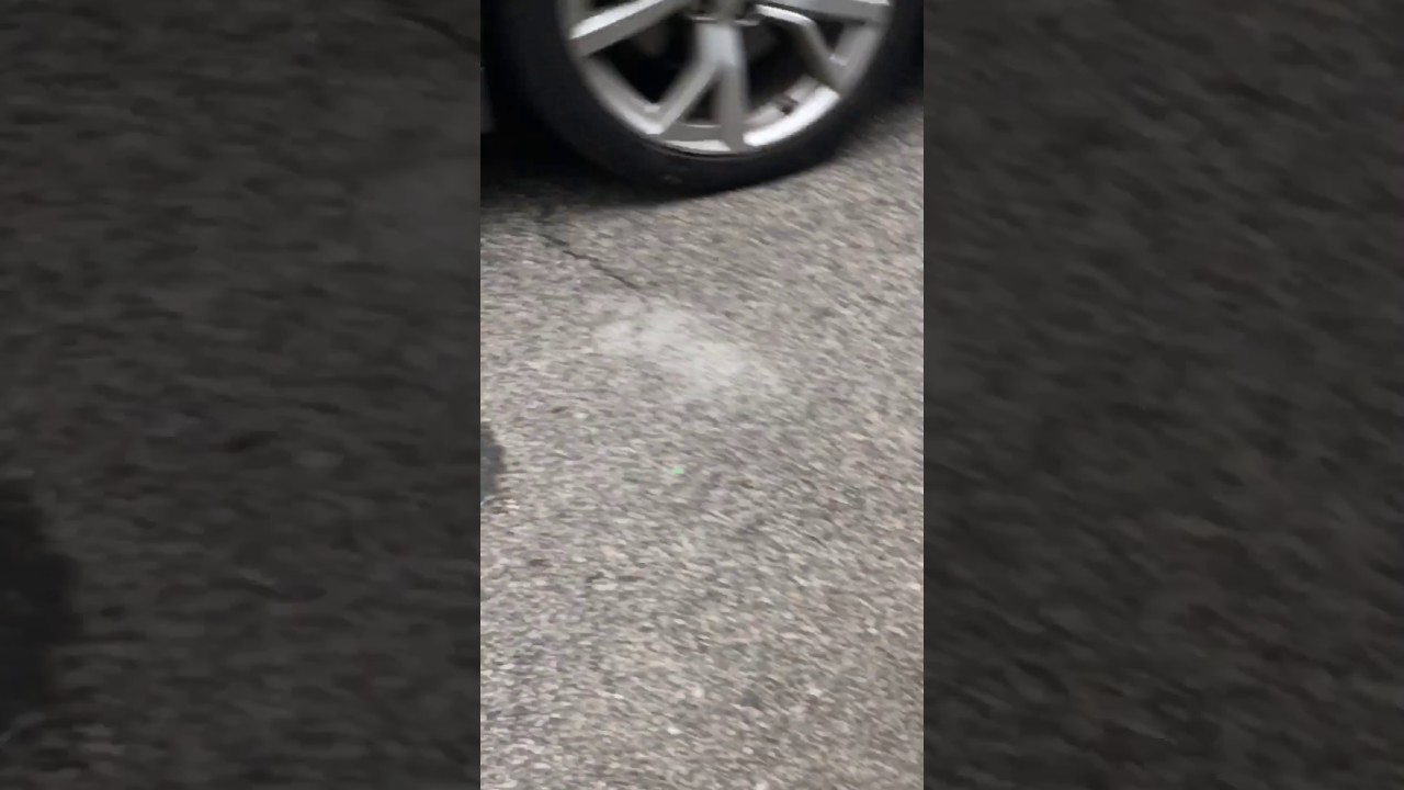 Cat got ran over