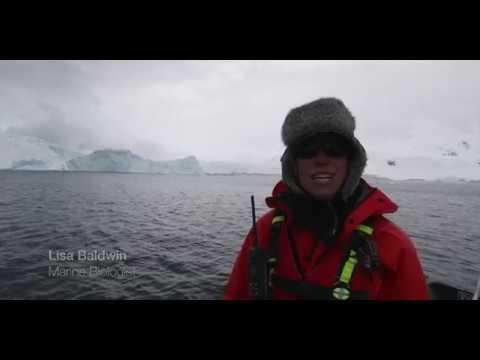 Antarctica And Patagonia Cruise On Seabourn Quest - Dec 2018