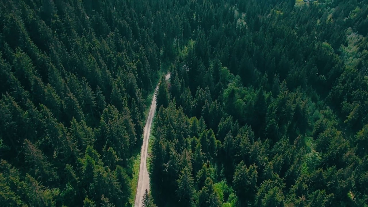Freedio Forest Road Aerial View Royalty Free Hd Stock Video