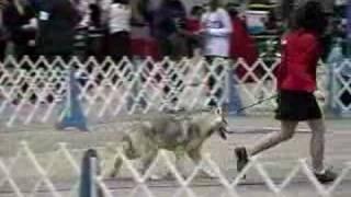 American Kennel Club In Abilene