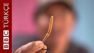 Himalaya Viagrası: Dünyanın tıbbi amaçlı kullanılan en pahalı mantarı