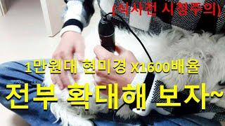 현미경 확대 X1600 강아지를 보면 생기는 일(약혐주…