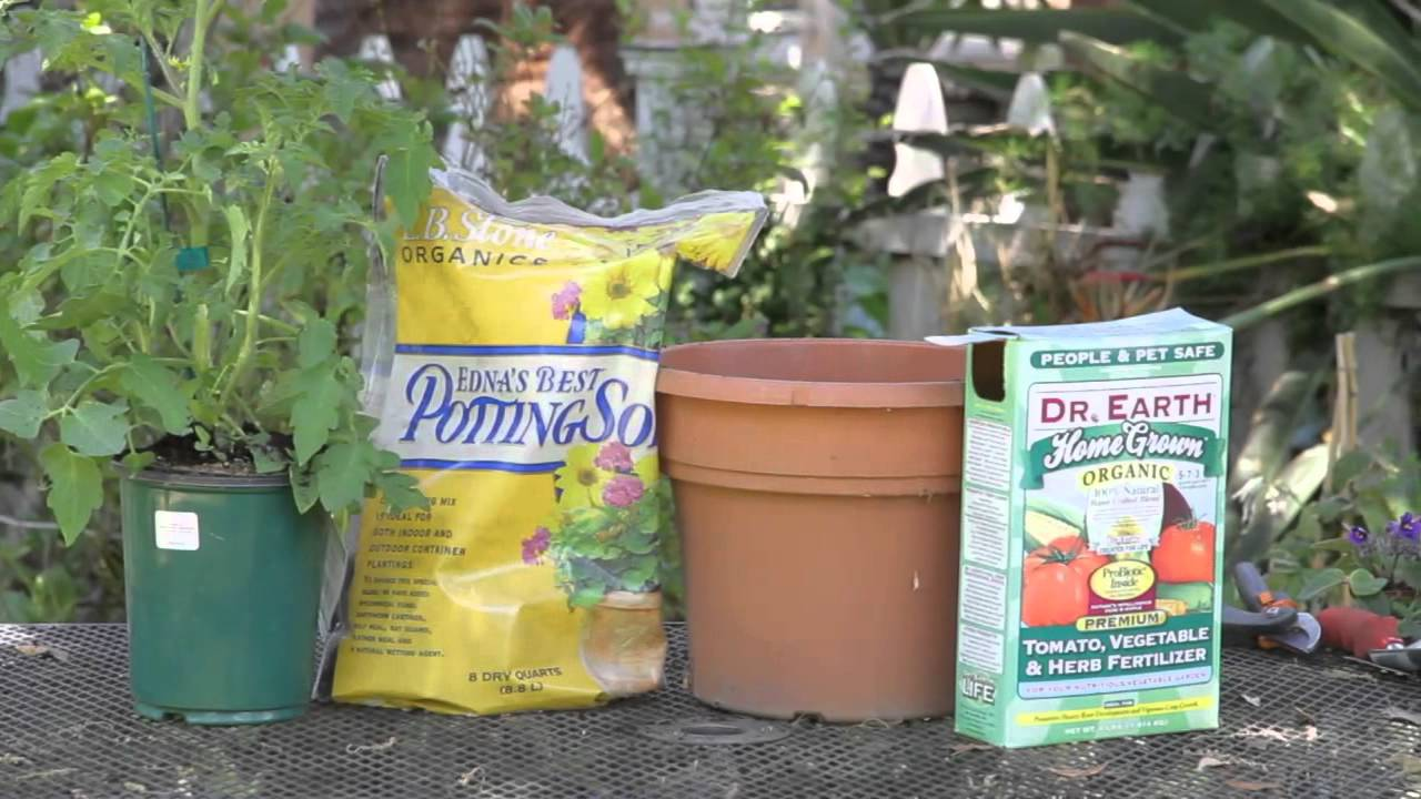 What is the best soil for tomatoes - Which Type Of Soil Makes A Tomato Grow Faster