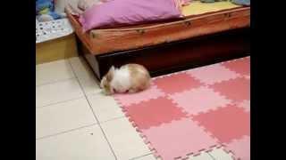 兔寶很開心喔