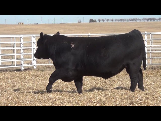 Express Ranches Lot 386