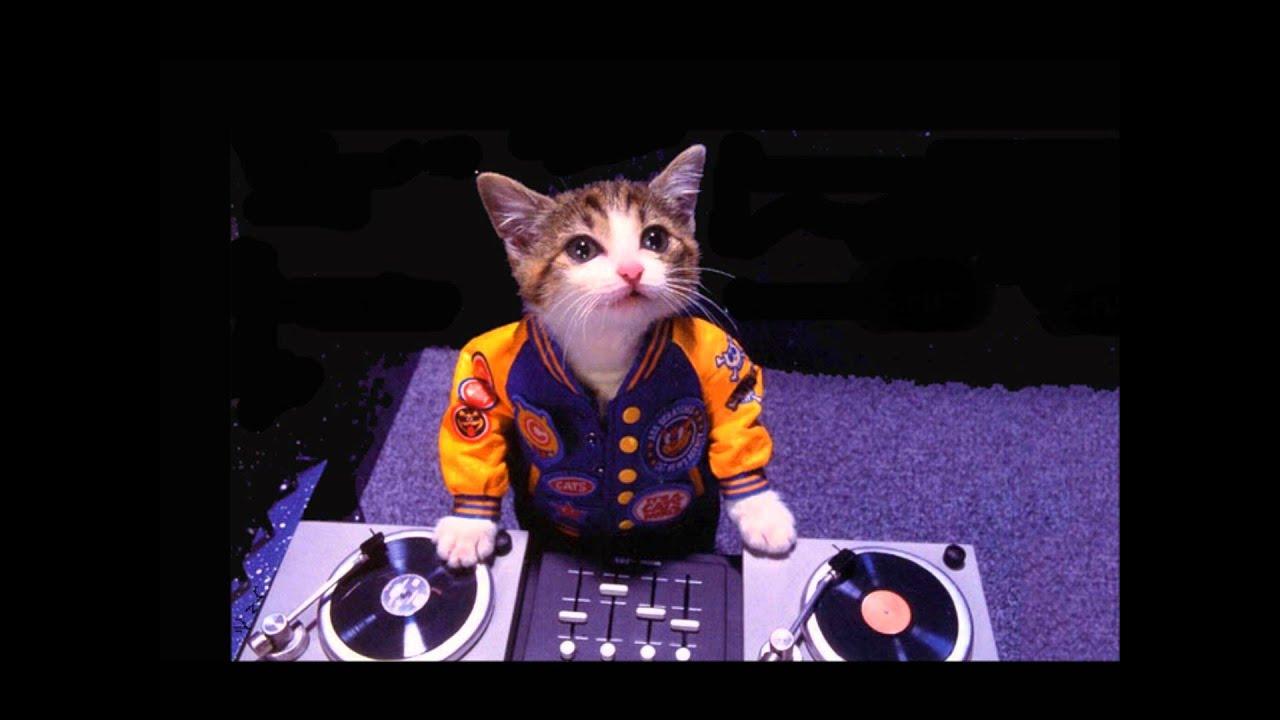 Funny Cat Videos Dj