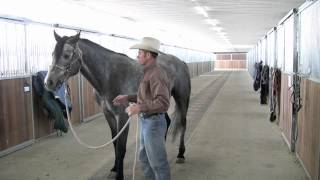 Teaching lateral flexion in the snaffle
