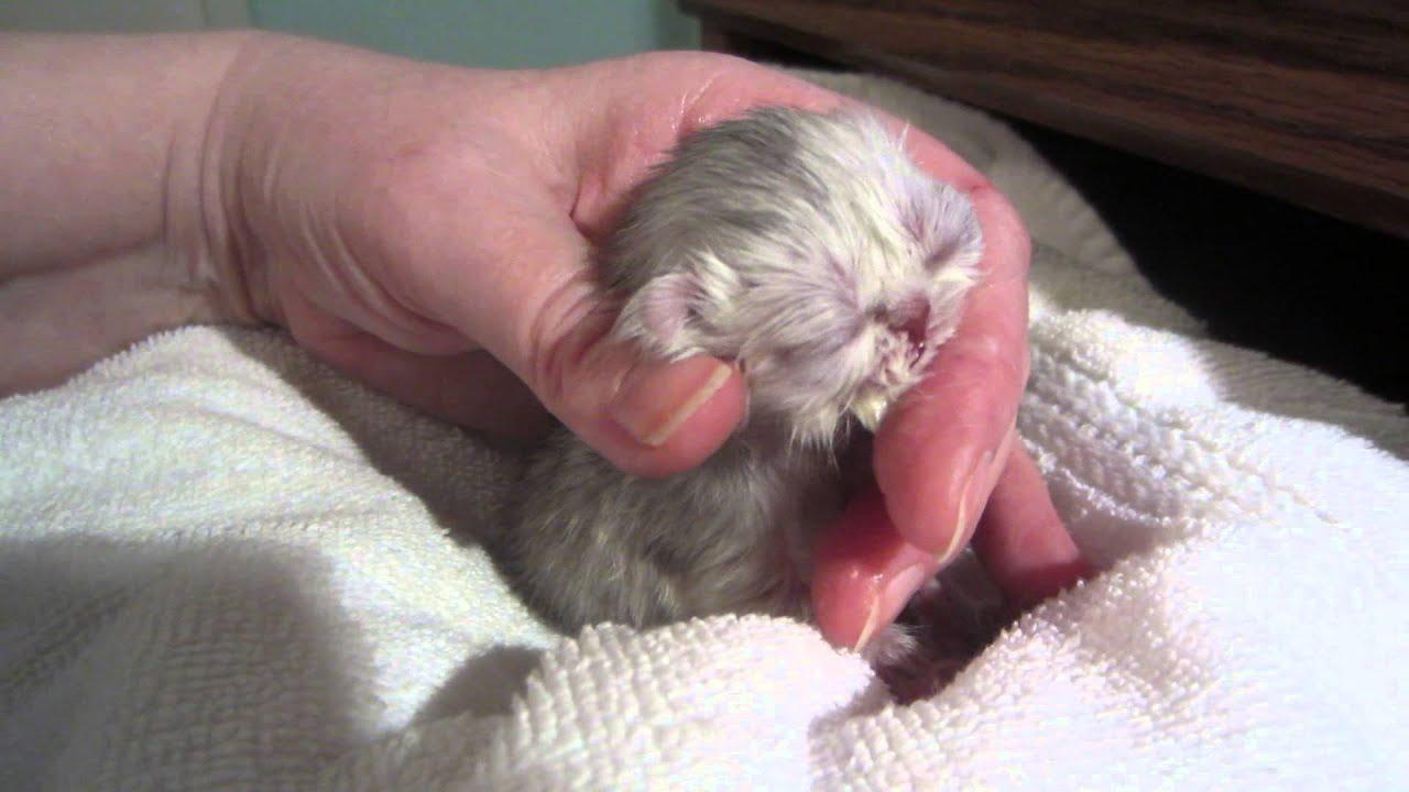 Mr Quackers Just 2 Days Old Hand Feeding A Newborn