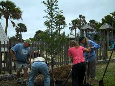 Apalachicola Tree Committee Live Oak Planting at Battery Park Playground 5 -1-13