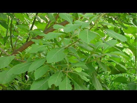Curso Cultivo Orgânico de Plantas Medicinais