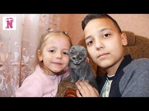 Кошка Ася маленький
