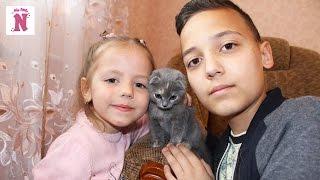 Кошка Ася маленький питомец Настя и Саша играют с кошечкой кормят её Видео для детей Small pet cat