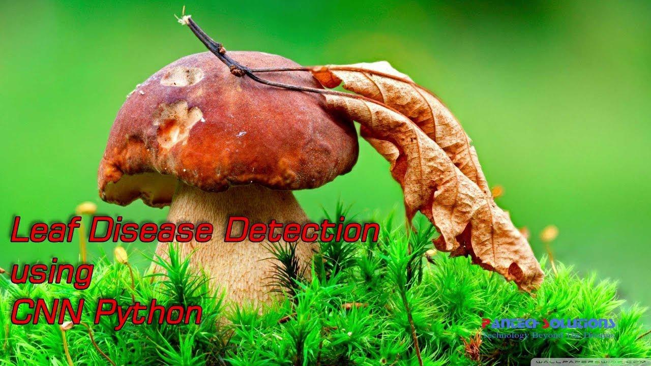 Leaf Disease Detection using CNN Python