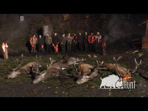 Driven hunt in Poland 2019 / Chasse battue en Pologne 2019 (prohunt.eu)