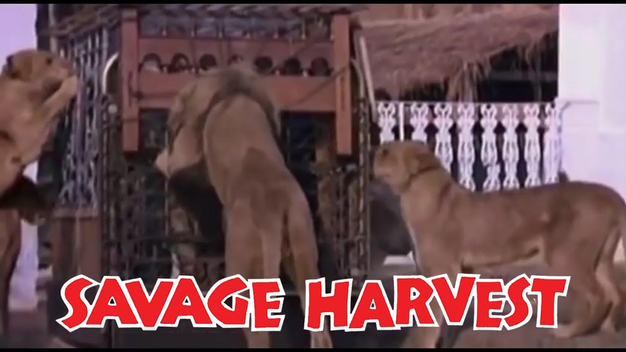 Download Savage Harvest (1981) (480p) (English)
